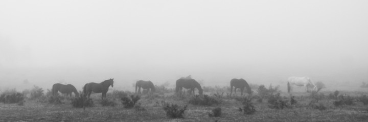 Harras In The Mist
